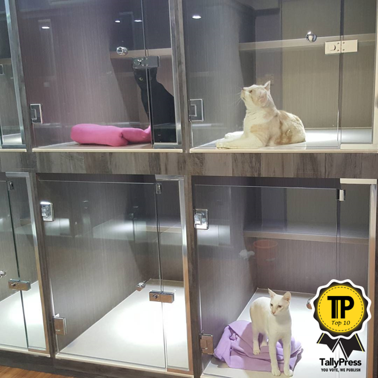 top-10-pet-boarding-centres-in-singapore-catopia