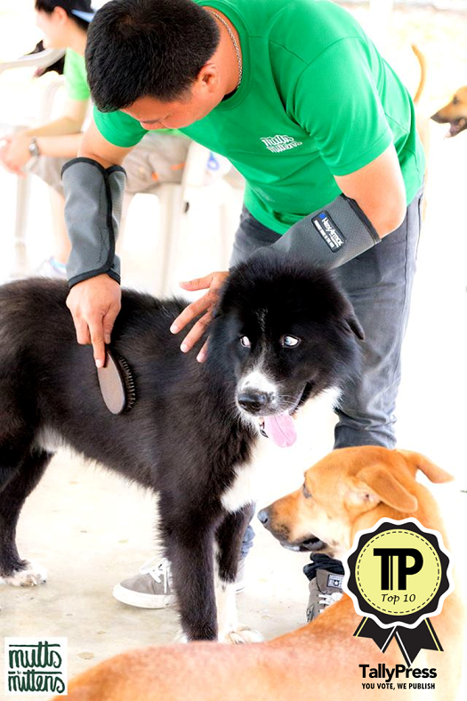 top-10-pet-boarding-centres-in-singapore-mutts-and-mittens
