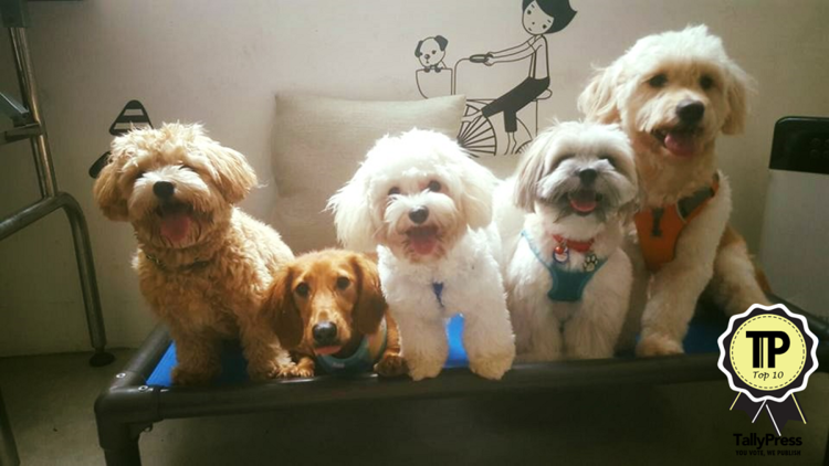 top-10-pet-boarding-centres-in-singapore-up-for-paws