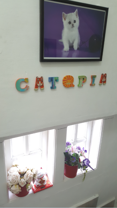 Image credit: Catopia