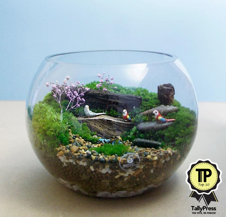 singapores-top-10-terrarium-makers-green-banana