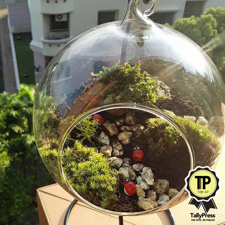 singapores-top-10-terrarium-makers-mosto-terrarium