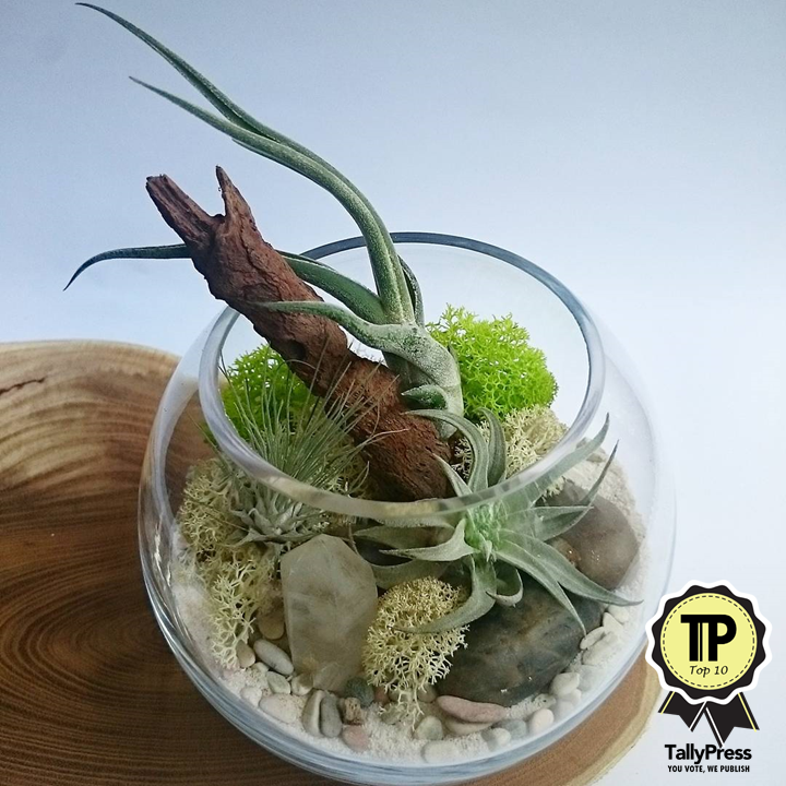 singapores-top-10-terrarium-makers-qing