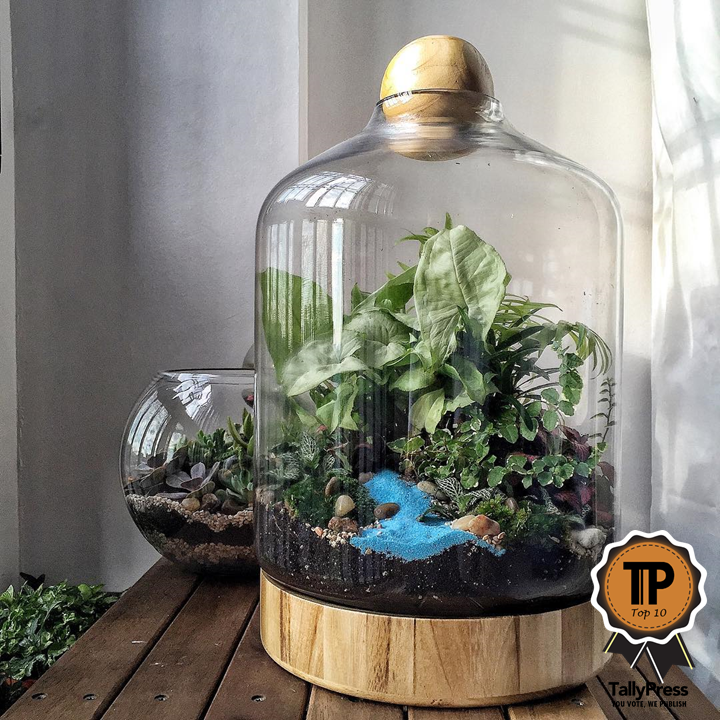 singapores-top-10-terrarium-makers-the-green-capsule