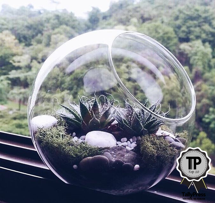 singapores-top-10-terrarium-makers-the-green-co