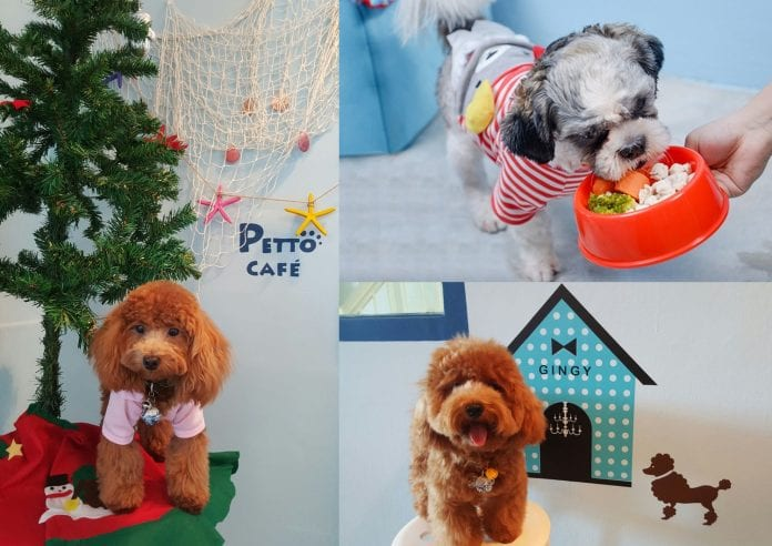 Petto Cafe - A Santorini Themed Pet-Friendly Cafe