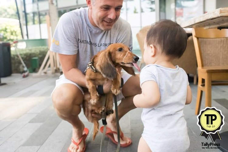 10-singapores-top-10-pet-friendly-cafes-kith-cafe