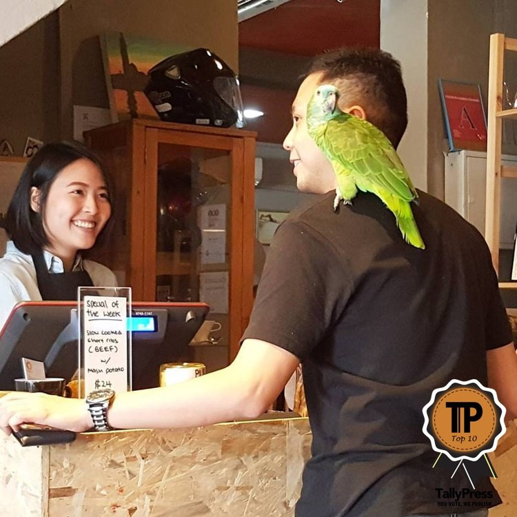 3-singapores-top-10-pet-friendly-cafes-sun-ray-cafe