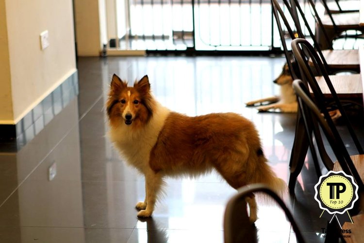 5-singapores-top-10-pet-friendly-cafes-paws-n-pans