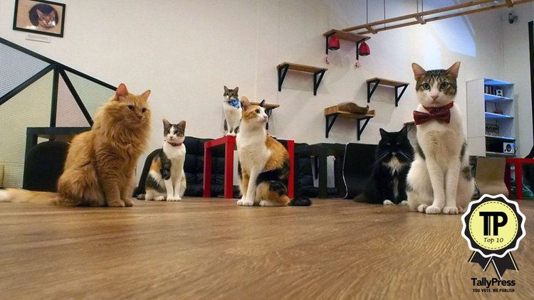 8-singapores-top-10-pet-friendly-cafes-the-cat-cafe