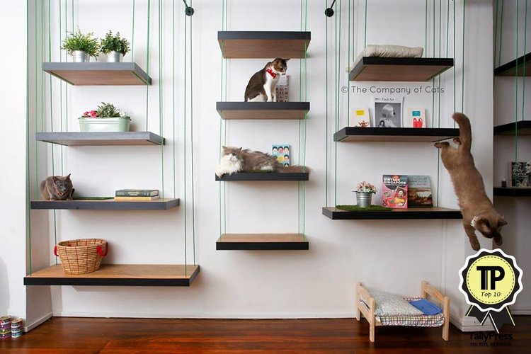 9-singapores-top-10-pet-friendly-cafes-the-company-of-cats
