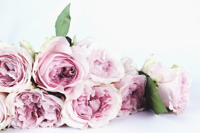 8 Unique Flowers Girlfriend will Love
