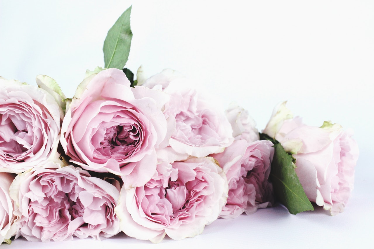 8 Unique Flowers Your Girlfriend Will Love