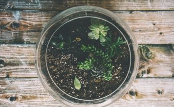 5 Terrarium Workshops You Can Sign Up in Singapore