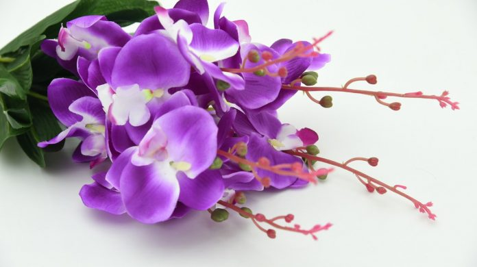 Where to Buy Unique Orchids in Singapore