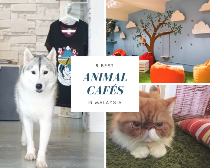 8 Best Animal Cafés in Malaysia