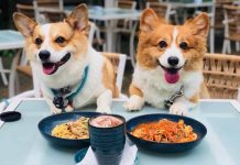 Top 10 Pet-Friendly Cafés in Singapore 2019