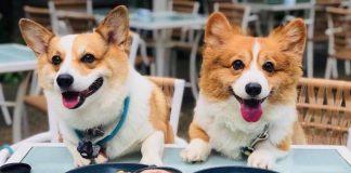 Top 10 Pet-Friendly Cafés in Singapore 2019