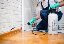Top 10 Pest Control Services in KL & Selangor