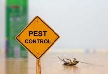 Top 10 Pest Control Services in Singapore 2020