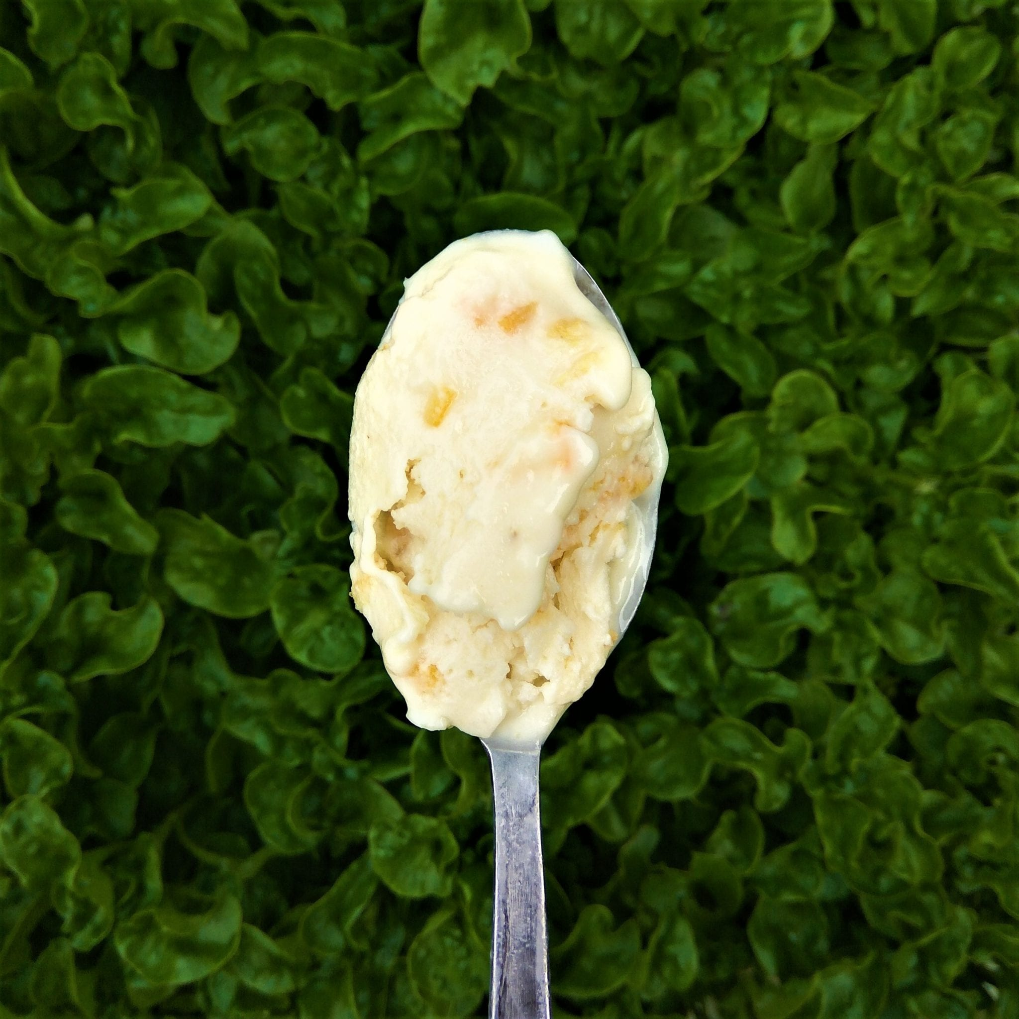 Lemony Orange Peel Ice Cream
