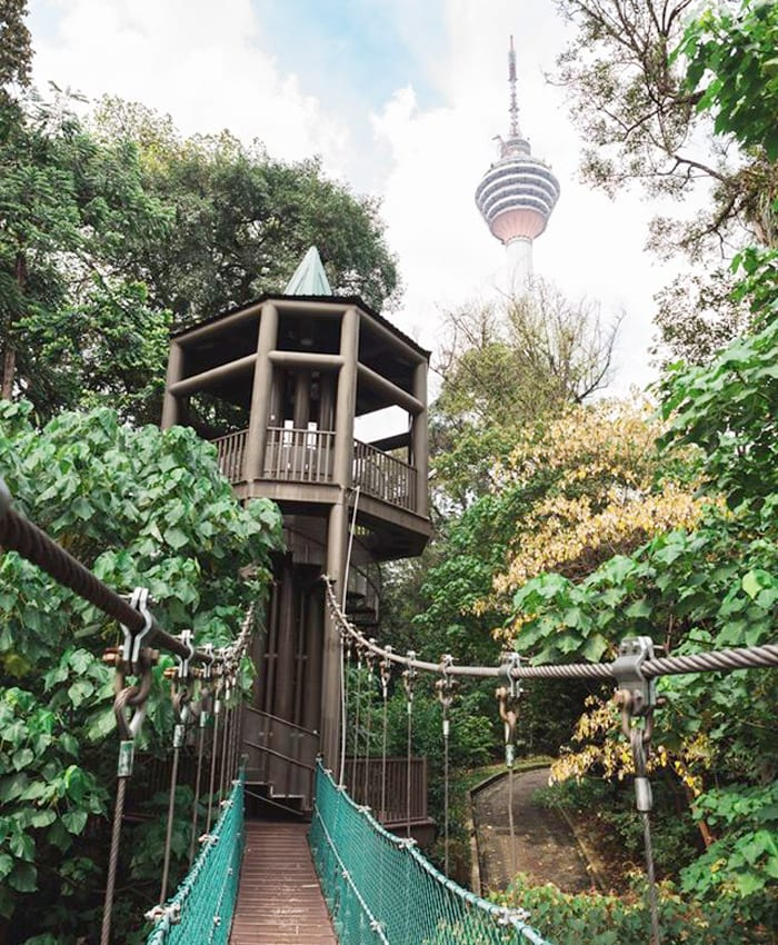 The 200-metre canopy walk of KL Eco Forest Park