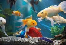 Top 10 Aquatic Pet Shops in Singapore